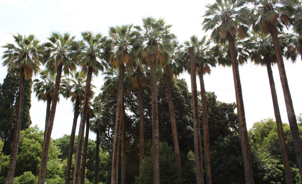 Ogród Narodowy w Atenach